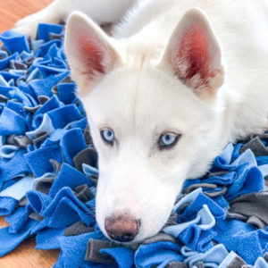 Lexa the Husky laying on snoofle mat medium size