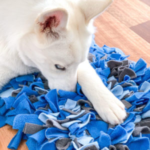 Lexa the Husky using snoofle mat medium size